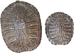 Turtle Shells - Red Ear Slider