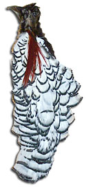 Pheasant Feathers - Lady Amherst - Crowns