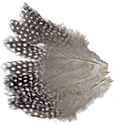 Guinea Hen Feathers - Strung Body Plumage - Large Eyes