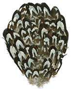 Feather Pad - Reeves / Venery Pheasant