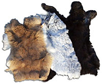 Rabbit - Select Grade - Large Natural Colors