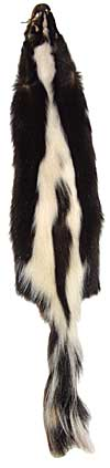 Skunk - Select - With White Stripe