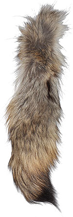 Coyote - Tails