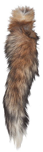Red Fox - Tails