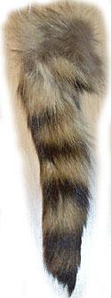 Raccoon - Tails