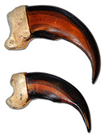 Imitation Grizzly Bear Claws