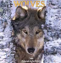 2009 Wall Calendar - Wolves