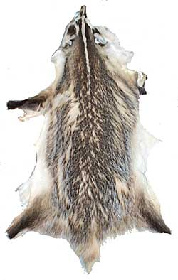 Badger with Face & Tail - Select Grade